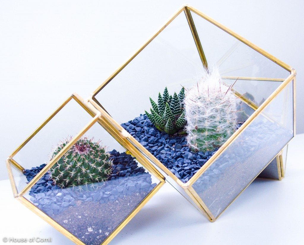 DIY + cactus terrarium + how to + Succulent Plants + Cactus Plants + cactus pots + westelm + Orchard supply + venice canals + los angeles + house of comil + la blogger + style blogger