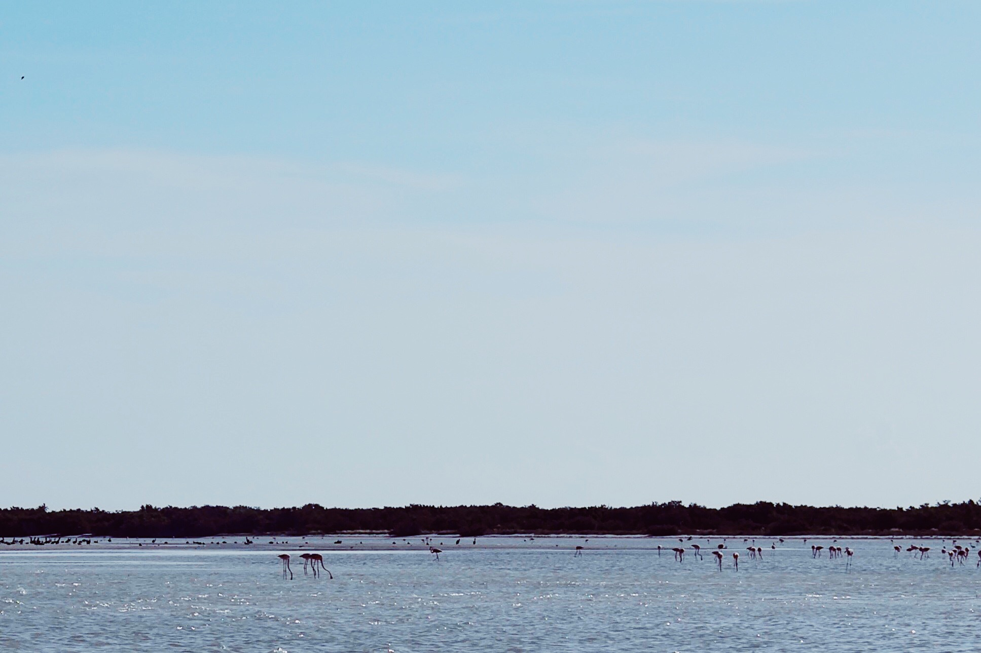 Holbox Beach Flamingo watching on the morning what to do in Holbox