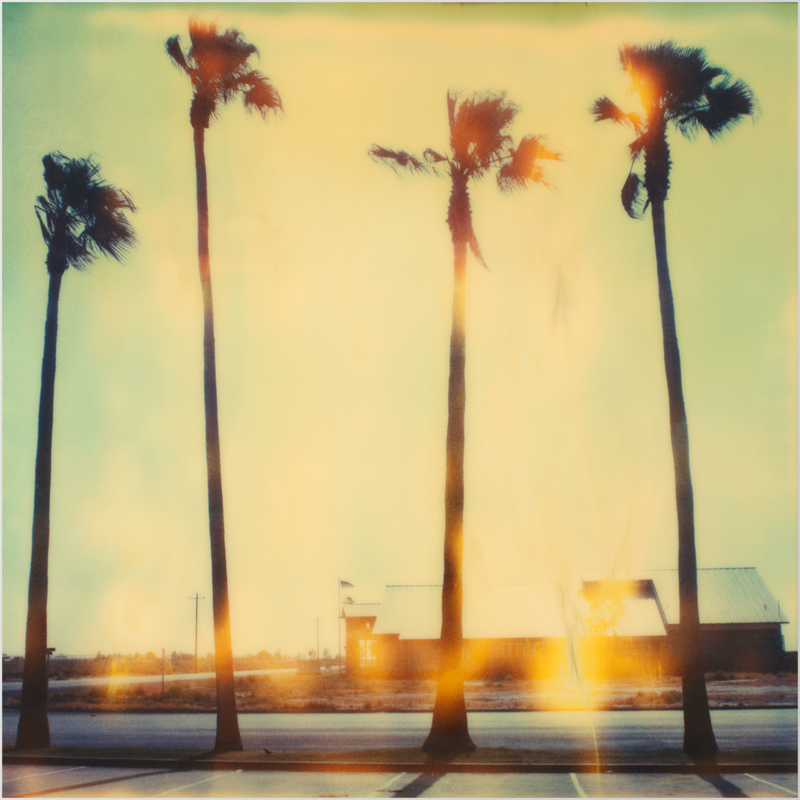 PALM TREES Lumas gallery review discount code coupon code